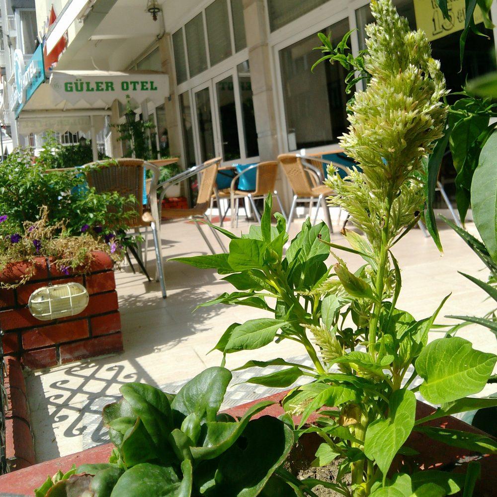 Gülerotel.com-Üzeri açık restoran bölümü